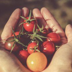Einkochen/Einwecken: Zucchini-Tomatensauce