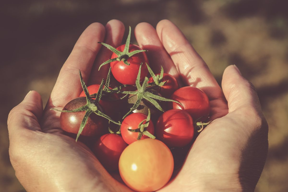 [Scharfe] Zucchini-Tomatensauce eingekocht