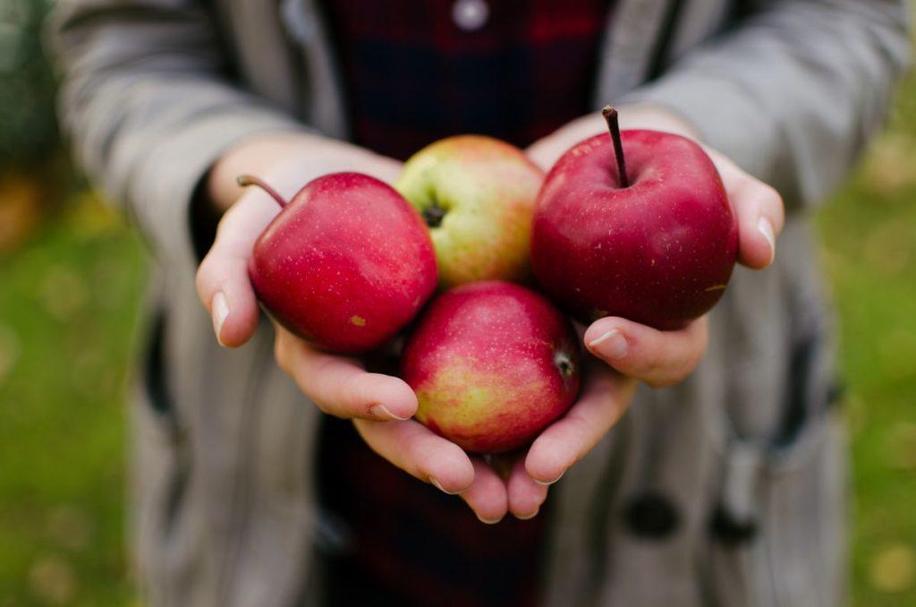 Selbstgesammelte Äpfel von der Streuobstwiese